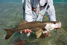 Snook Fishing – How to Catch Snook   Fishing from Florida Shores
