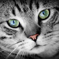 #dogalize Ojos de Gato: como comunican los gatos #dogs #cats #pets