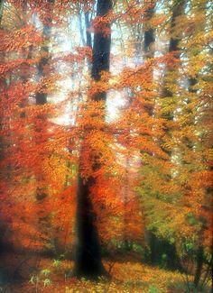 BÜKKÖS ŐSSZEL Fedőlap; Illusztráció, MMXIII Olaj, fa - 45 X 29 cm  EUROPEAN BEECH Book cover; Illustration, MMXIII Oil on wood - 45 X 29 cm