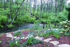 #Landscaping to the creek