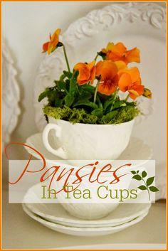 Oh my, how I love little the lion faced pansy! It is a sweet harbinger of spring!  Pansies are very inexpensive and make fun and unexpected arrangements indoors. This year I put pansies in tea cups! Pansies are so welcomed after a long long winter.  They are like a promise that Spring and warmer weather …