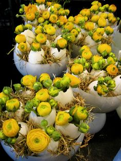 Ken Marten: Yellow ranunculus and straw in egg shells. Easter, The Connaught Hotel, Mayfair, London
