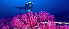 Trikeri - Greece - Greek destination - Traveller - Backpacker - Travel - Trip - Villages of Trikeri - Scuba diving - Sea - Coral Travel Trip, New Travel, Maybe Someday, Centaur, Backpacker, Scuba Diving, Arrow, Greece, Coral