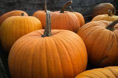 How a little pumpkin can get rid of your Halloween skin.