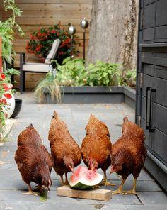 Brunch with the girls. chicken coop | Kara Rosenlund