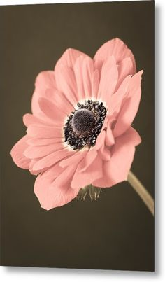"""#Anemone Metal Print featuring the photograph """"Angled Anemone"""" by Caitlyn Grasso. #pink #macro"""
