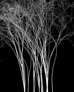 [Finos fios tecem a vida Conexões  Complexas Completas]  Gostou? Curta nossa página e compartilhe nossa arte!  Imagina vestir a arte entrama? Confira o nosso site, entregamos em todo o Brasil!  http://entrama.com.br  Facebook: facebook.com/arte.entrama  Twitter: @Arte.Entrama  #entrama #arte #design #poesia #árvore #conexões #estampa #camiseta #complexidade #completude
