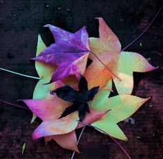 Autumn colours by maureen_g, via Flickr Autumn Colours, 2 Colours, Vibrant Colors, Autumn Pictures, Autumn Scenery, Autumn Leaves, Good Night, Falling In Love, Fall Decor