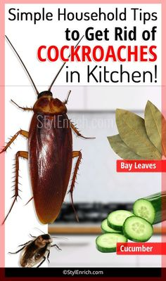 how to get rid of roaches in the kitchen pinterest roaches rh pinterest com how to get rid of cockroaches in the kitchen how to get rid of small roaches in the kitchen