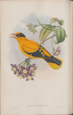 """https://flic.kr/p/neajWF 