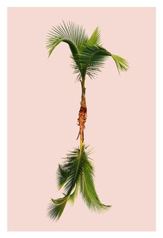 Studio Proba - A Poster A Day - Day 1092 — Ours Anonymous Q: How can cleaning be more fun? Different Media, All Poster, Tropical Leaves, Illustration Art, Illustrations, More Fun, This Is Us, Graphic Design, Studio