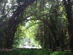 Judd Trail - Honolulu, Hawaii