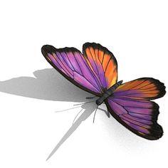 Butterfly Obj - 3D Model