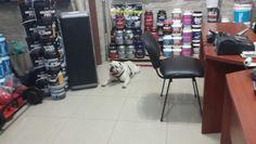 Nos visitó un cliente con su mascota! Tenía calor y se recostó sobre el porcelanato. Foto tomada en las tiendas de DeMusculos.com