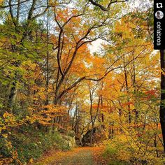 #Repost @cefabros  WONDER . Life is full of astonishment in which we marvel the beauty of it . The surprises it provide is a miracle that we should be aware of . It is a wonderful life after all . #fallformohonk #wordsofwisdom  #mohonk #mohonkpreserve #newpaltz #iloveny #nature #environment #naturelovers #rocks #trees #trails