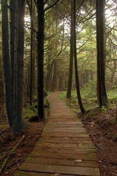 The healing benefits of forest bathing.