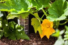 Better Gardening Using Pallet Collars http://www.kronus.eu/en/blog/articles/gardening-using-pallet-collars