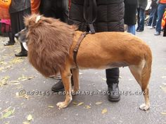 The Very Best 3-Legged Lioness – Pet Dog Costume! ...This website is the Pinterest of birthday cakes