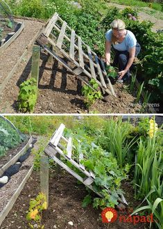 DIY Pallet Cucumber Trellis -- Re-purpose a wood pallet into a quick and sturdy DIY cucumber trellis -- no tools required. It gives space for the plants to grow and makes harvesting an easy task gardening No tools required DIY Pallet Cucumber Trellis Vegetable Garden Design, Veg Garden, Vegetables Garden, Vegetable Gardening, Veggie Gardens, Easy Garden, Garden Plants, Garden Tools, Growing Vegetables