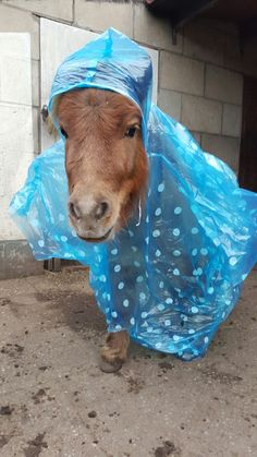 #Milou Mentink  Snow flake is klaar voor de regen.