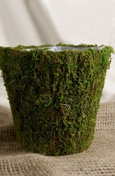 Moss Planter 6.75in