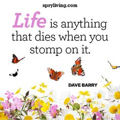 Dave Barry #quote on spryliving.com