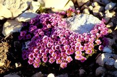 Flowers That Grow in Extreme Conditions | ProFlowers Blog