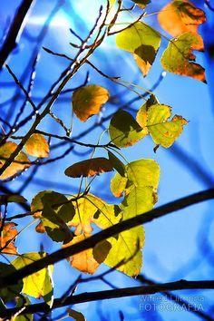 Fotografías para decorar. Atardecer con hojas amarillas de Wifred Llimona. http://www.lallimona.com/foto/flora/