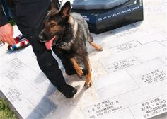 LIBERTYVILLE – Man's best friend was honored Wednesday morning at the unveiling of the Northern Illinois Police K-9 Memorial.