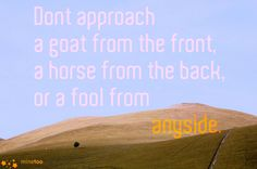 Don't approach a goat from the front, a horse from the back, or a fool from any-side.