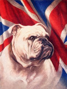 Bulldog With Union Jack Flag Print Greetings Note Card Bulldog Mascot, Bulldog Puppies, Union Jack, Nocturne, Happy St George's Day, Bulldogge Tattoo, Puppy Quotes, British Bulldog, England