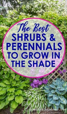 I love this list of plants to grow in shade! It has lots of perennials and shrubs that are perfect for the flower beds in my backyard shade garden. #ShadePlants #PlantsToGrowInShade #GardeningTipsAndPlants #ShadePerennials