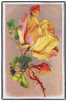 Lilac & Lavender: One Perfect Rose Catherine Klein, Flower Images, Flower Art, Vintage Cards, Vintage Postcards, Vintage Flowers, Vintage Floral, June Flower, Coming Up Roses