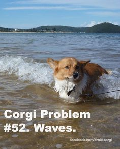 #Corgi Problem #52. http://sulia.com/my_thoughts/27c92cde-1b4e-4fe6-b2c3-f3e096e1bb4a/?source=pin&action=share&btn=small&form_factor=desktop&pinner=124041943