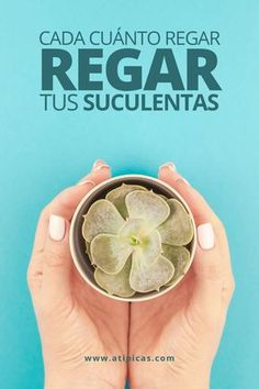 Succulent Care, Succulent Gardening, Suculentas Interior, How To Water Succulents, Makeup Store, Cactus Y Suculentas, Wood Working For Beginners, Diy Cleaning Products, Plant Care