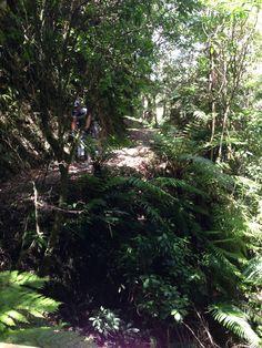 Matt powering through the bush on the Pakihi Stream trail at Motu