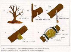 El acodado es un método de propagación en el cual se provoca la formación de raíces adventicias a un tallo que está todavía adherido a la...