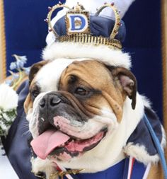 Go Drake Bulldogs! #envy