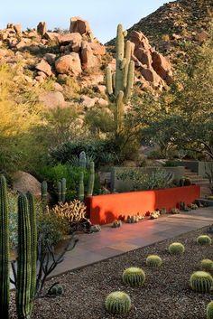 "Echinocactus grusonii (Golden Barrel Cactus) Portland Garden Design Calimesa ""Dream Team"", CA Landscape Architecture, Landscape Design, Architecture Design, Grand Cactus, Portland Garden, Dry Garden, Desert Homes, Landscaping Plants, Landscaping Ideas"