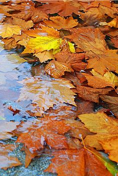 **There is something so beautiful about autumn leaves in water.