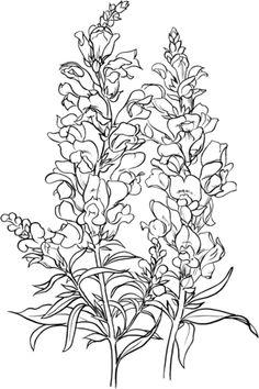 Antirrhinum Majus or Common Snapdragon Coloring page