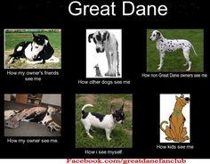 So true...Great Danes