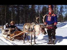 Rovaniemi: Rénszarvas szafari