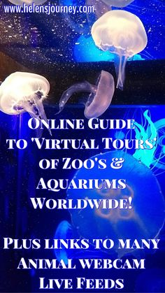 The ULTIMATE Guide to using online 'Virtual Tours' to visit Famous Places, Landmarks and Tourist Attractions! An EPIC list of links to take you all over the World! 360 Virtual Tour, Online S, Live Animals, Online Travel, Famous Places, World Traveler, World Heritage Sites, Helping Others, Trip Planning