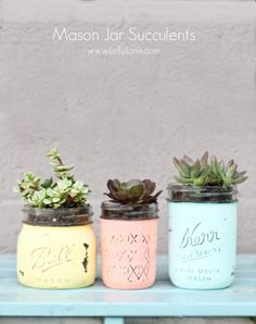 DIY Mason Jar Succulents. Love how easy and cheap these are to make! via lollyjaneblog