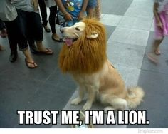 Trust me, I'm a lion. This never fails to make me smile.