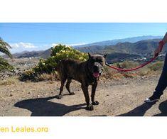 Adopta un viejete  #Adopción #adopta #adoptanocompres #adoptar #LealesOrg  Contacto y info: Pulsar la foto o: https://leales.org/animales-en-adopcion/perros-en-adopcion/adopta-un-viejete_i857 ℹ  Sacado del albergue. Resignado y triste. Ahora le ha cambiado la cara.  es muy bueno y cariñoso. pasea bien con correa. Sociables con otros perros gatos y animales de granja.Tolera a los perros pequeños si son tranquilos y no le ladran.Sociable con las personas.    Acerca de esta publicación:   Esta…