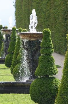 Topiary and water games - Palace of Versailles park Boxwood Garden, Evergreen Garden, Topiary Garden, Chateau Versailles, Versailles Garden, Landscape Design, Garden Design, Garden Art, Parks