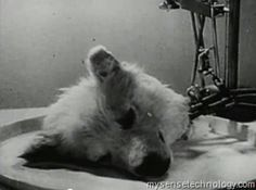 Experiments in the Revival of Organisms - year 1940 - Video   link - http://www.mysensetechnology.com/2011/12/information-technology-experiments-in.html