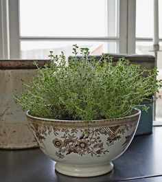 kitchen herbs | thyme in brown transferware